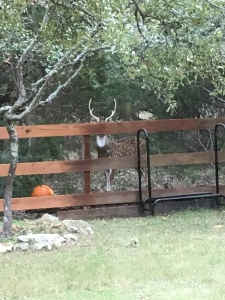 Deer and Pumpkin 2
